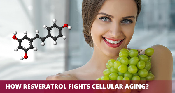 How Resveratrol Fights Cellular Aging?